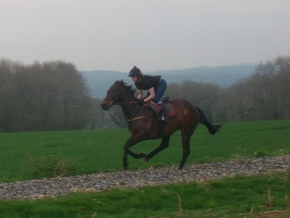 Living Leader on gallops